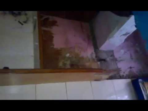 Cupboard destroyed by termites