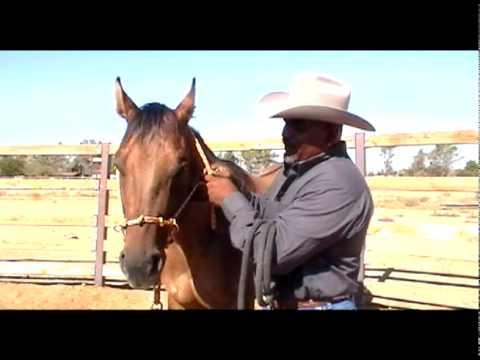 Pegasus Training Halter Demo Video