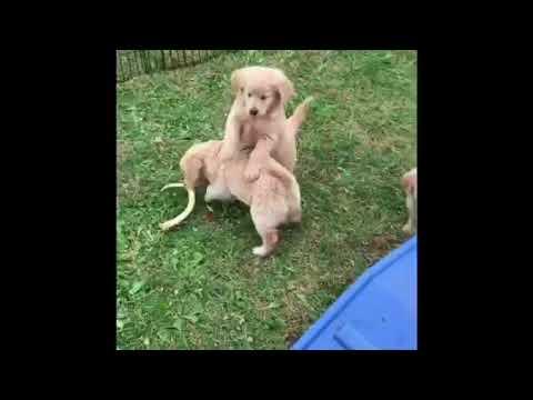 ME Litter Puppy Pick