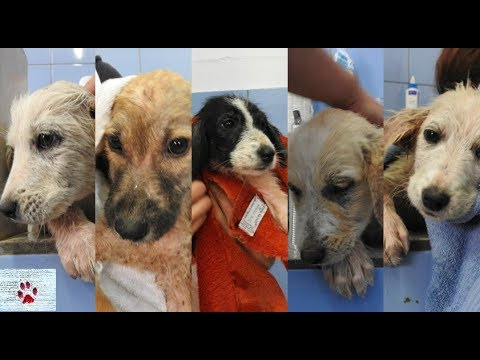 Sad stray puppies recover from mange and transform into adorable little brats