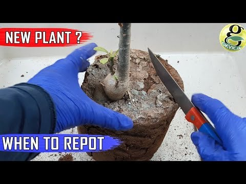 WHEN TO REPOT NEWLY PURCHASED PLANT: From a Garden Store Nursery or Online – Repotting Plant Tips