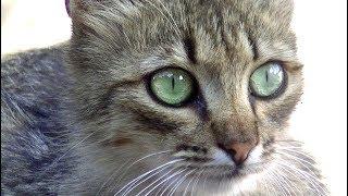 Download 猫を捕獲できて一安心と思ったら・・まさかの展開に涙 ♯4 Video