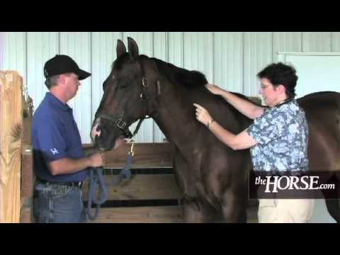How to Take Your Horse's Vital Signs