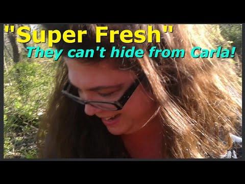 Morel Mushroom Hunting with Carla!