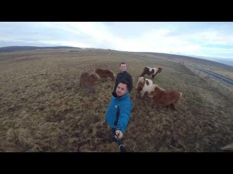 Shetland Unst 2017