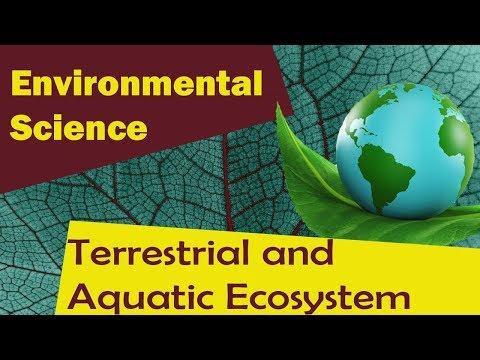   Terrestrial and Aquatic Ecosystem   - Environmental Science