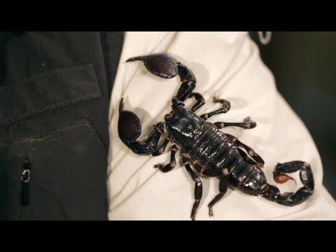 9 Emperor Scorpion Facts & Care Tips | Pet Tarantulas