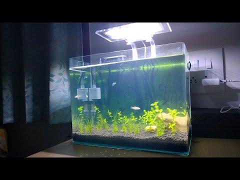 Setting Up Nano Planted Aquarium - DIY
