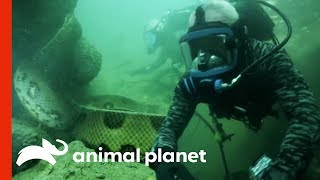 Face-to-Face with a 20-Foot, Monster Anaconda | River Monsters