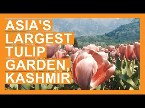 Asia's largest Tulip Garden with 1.25 million tulips thrown open for Tourists in Kashmir (2018)