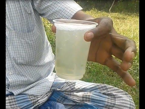Cleaning Fresh Aloe Vera + Making Juice in My Village - Healthy Juice - Food Money Food