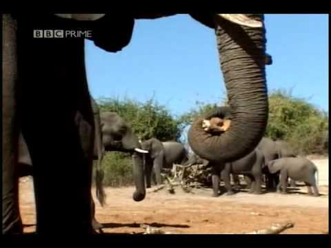 Elephants meet death