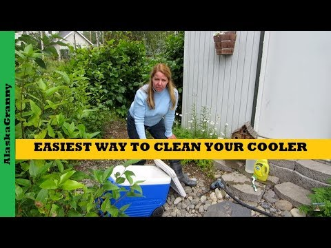 Easiest Way To Clean Your Cooler