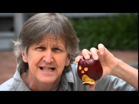 How to Make an Apple Puppet