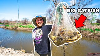 Cast Netting HUNDREDS of BIG FISH to FEED My PET FISH!!!