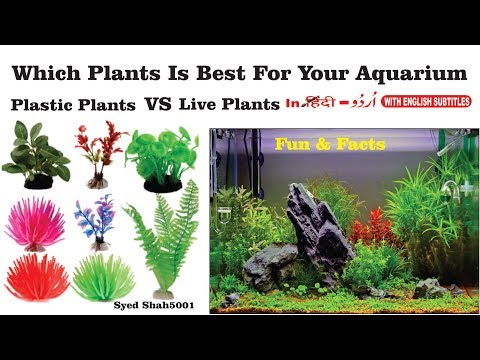 Real or fake plants in aquariums?How to use Fake Plants which best live or artificial plants