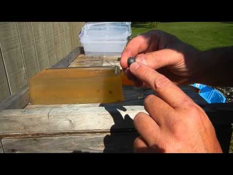 44 Cap and Ball vs 9mm hollow point in gelatin
