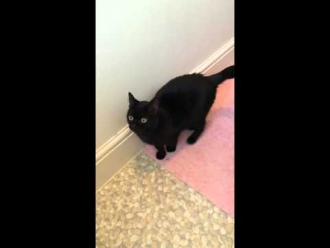 Stevie the Blind Cat Meowing