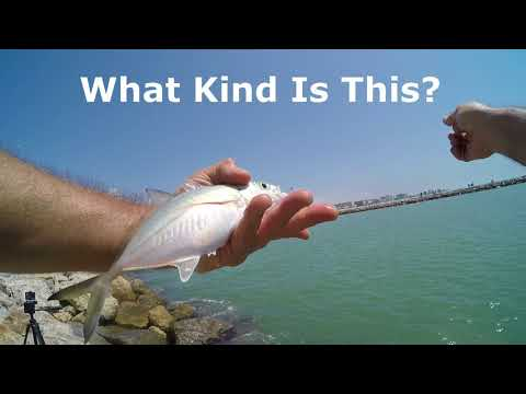 Fun Video Ultralight Jetty Fishing Catching Pinfish For  Bait
