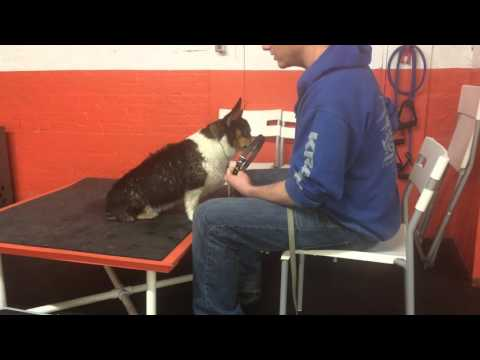 Aggressive dog rehab, major resource guarding |Solid K9 Training
