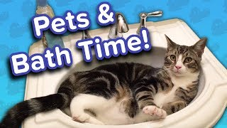 Pets in the Bath! // Funny Animal Compilation