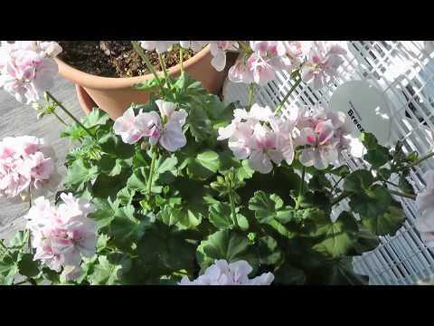 An Alternative to a Passive Solar Greenhouse - Indoor Window Garden