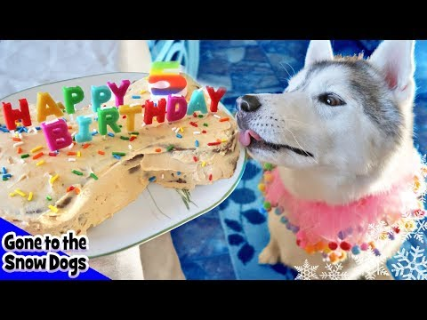 How to Make a Dog Birthday Cake | Birthday Cake For Dogs | DIY Dog Treats Recipe 98
