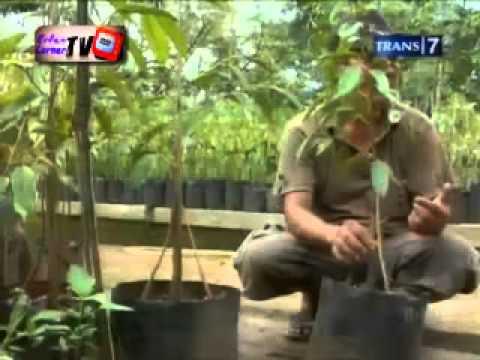 Demi Nusa Trans7 :: Durian Raksasa Dari Banyumas