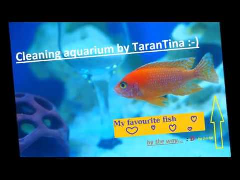 How To Clean A Fish Tank. Glass, Rocks, Aquarium Decorations.