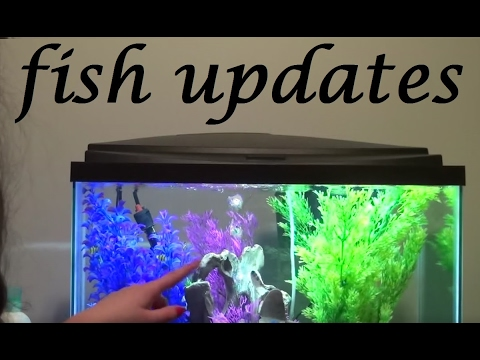 UPDATES! - Bettas and More | + Upcoming Plans