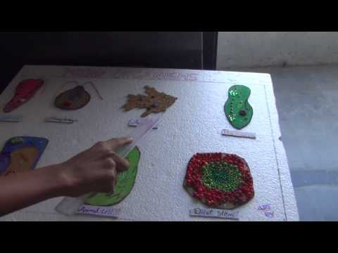 SCIENCE PROJECTS BY CLASS 8 STUDENTS 10 MICRO ORGANISMS