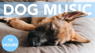 Dog Relaxation Therapy Music   Songs to Relax Your Dog! 💤