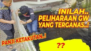 HEW4N T3RG4NAS DI RUMAH JOGLO..! Bulus Ivory | Feat. Panji Petualang