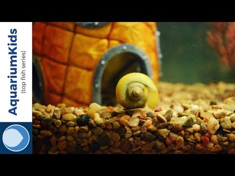 THE TOP 5 TANK MATES FOR MYSTERY SNAILS (4K UHD)