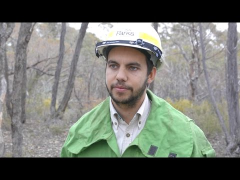 Get an insight into being a Project Firefighter