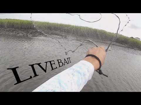 Catching Live Bait With The Cast Net! - Shrimp and Finger Mullet