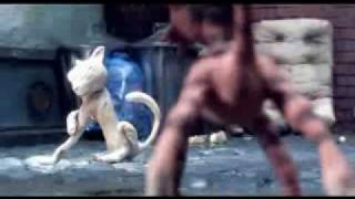 Kater/Tomcat