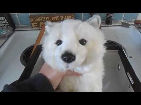 How to Make a Webkinz Signature Arctic Fox