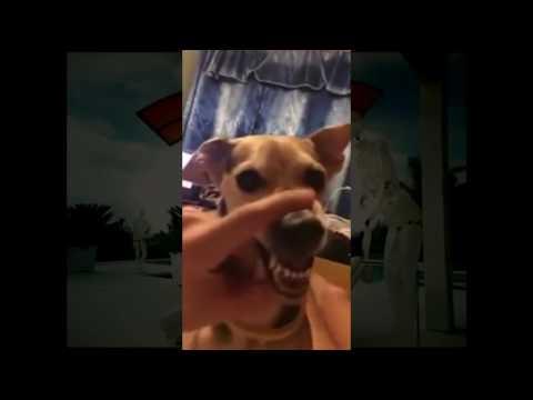 La La Dog Mix (Hungarian)