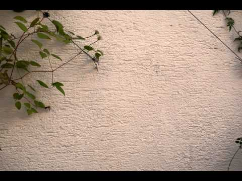 Ants on a wall #2