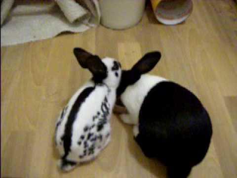 New Rabbit Bonding