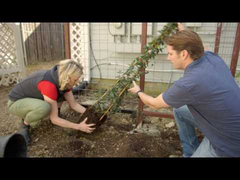 4. HOW TO SELECT AND GROW ON A TRELLIS