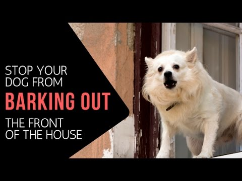 How To Stop Your Dog Barking Out The Front Of Your House