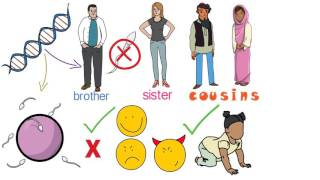 Why does Islam permit the marriage of cousins if genetics shows that this practice could be harmful?