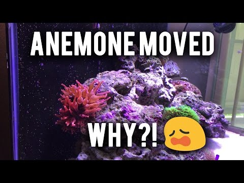My anemone moved! Why?!
