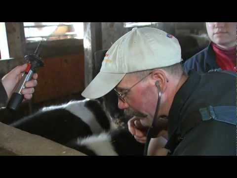 VetsOnCall - Pete Ostrum child 'Wonka' star devotes life to animals + farms