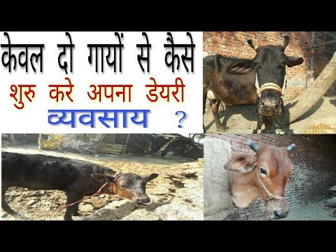 Dairy farming - how to start dairy with 2 cow for farmers & entrepreneurs must watch