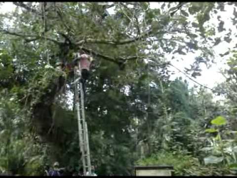 Tree Cutting : Veenalungal 2