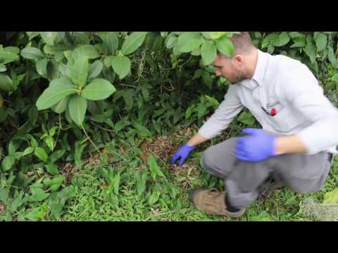 How To Get Rid Of Carpenter Ants in Florida