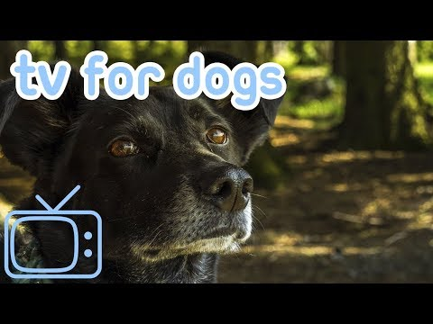 Meerkat, Sheep, Capybara TV for Dogs! Entertain Your Dog with This Stunning NEW Animal Footage!